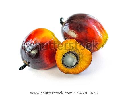 Palm Tree Produce Stock photo © ca2hill