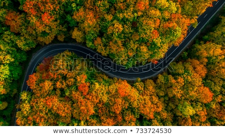 Foto stock: Estrada · outono · bétula · natureza · paisagem · folhas