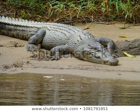 Sel eau crocodile up Photo stock © MojoJojoFoto