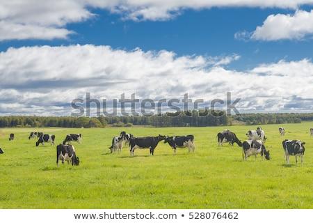 nurse bullfighter stock photo © jarp17