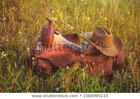 chicote · tradicional · camelo · couro · ferramenta · antigo - foto stock © lunamarina