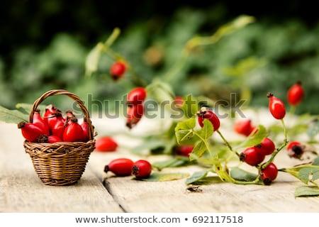 vermelho · rosa · quadris · ramo · folha - foto stock © tainasohlman