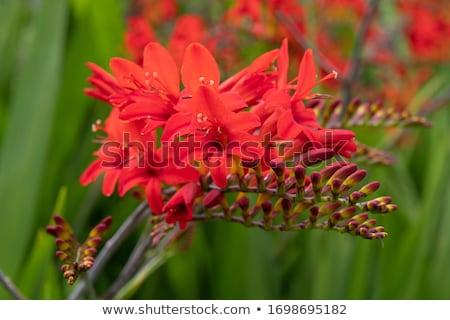 Fiori fiore giardino sfondo bella Foto d'archivio © Julietphotography