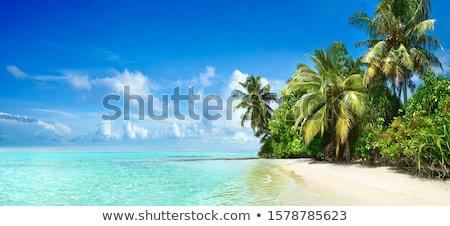 Тропический остров лодках пальмами вектора баннер дерево Сток-фото © -Baks-