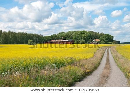 swedish rural landscape stock photo © olandsfokus