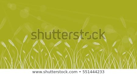 расплывчатый вектора лет зеленый рожь аннотация Сток-фото © saicle