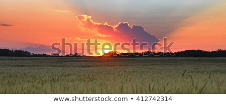 prairie sunset Stock photo © kovacevic