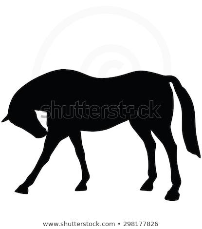 Paard silhouet permanente rond pose vector Stockfoto © Istanbul2009