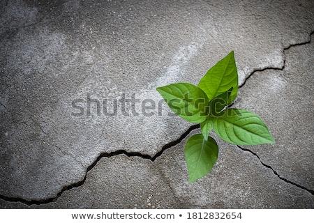 Гранит · пород · покрытый · поверхность · черный · цвета - Сток-фото © madrolly