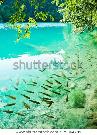 small fish in lake national park plitvice stock photo © master1305