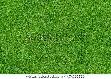 football on fresh spring green grass stock photo © tetkoren