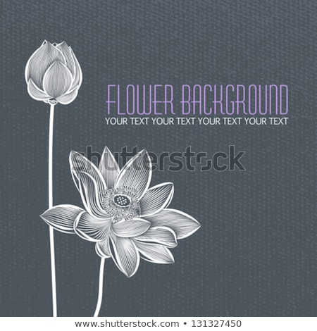 vector of fresh lotus flower stock photo © morphart