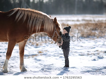winter boy with horse stock photo © paha_l