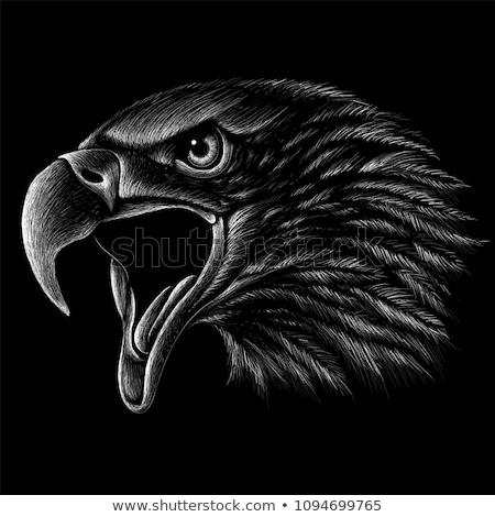 eagle head tattoo design vintage engraving stock photo © morphart