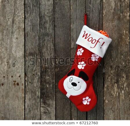 Noel · Evcil · köpek · kedi · sevimli · evcil · hayvan - stok fotoğraf © lightsource