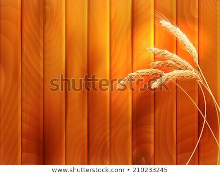 Wheat spikes on wooden board. EPS 10 Stock photo © beholdereye