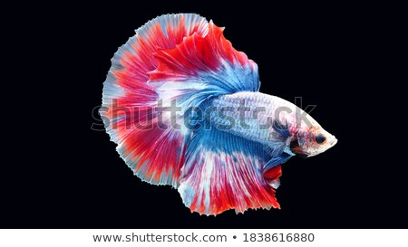 иллюстрация воды рыбы лист океана зеленый Сток-фото © bluering