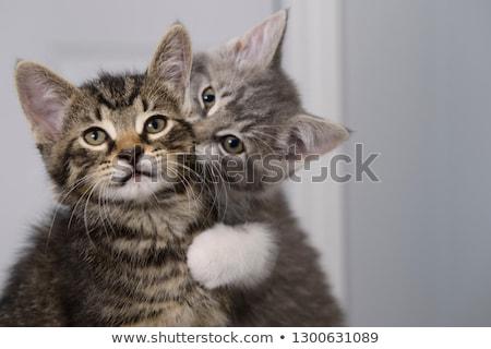 Sevimli kedi yavrusu yüz sarı gözler yukarı Stok fotoğraf © dnsphotography