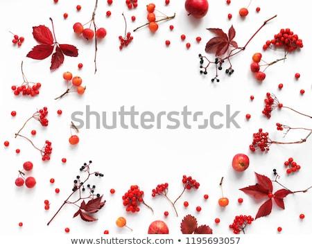 bayas · invierno · cubierto · nieve · árbol · frutas - foto stock © neirfy