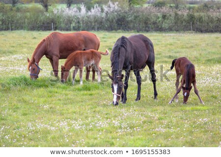 Four horses Stock photo © bluering