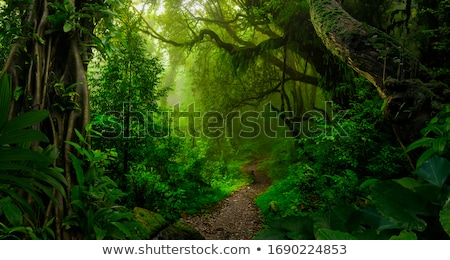 Selva cartaz céu árvore feliz montanha Foto stock © bluering