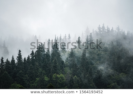 foggy mountain landscape stock photo © kayco
