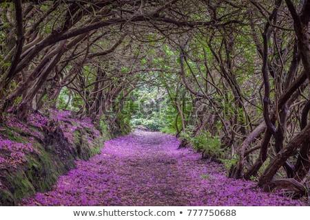 Tunnel Bush illustration fleurs herbe paysage Photo stock © bluering
