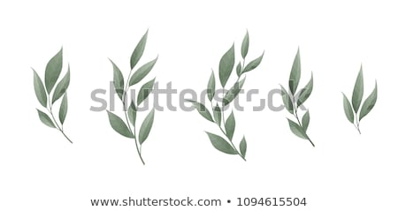Sprig of bay leaves Stock photo © Digifoodstock