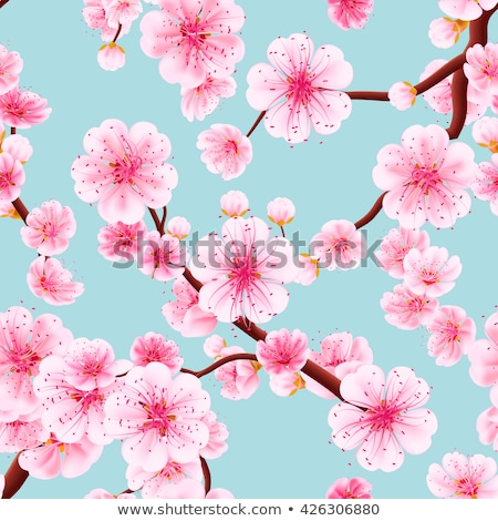 Rosa cereja sakura flor flores Foto stock © orensila