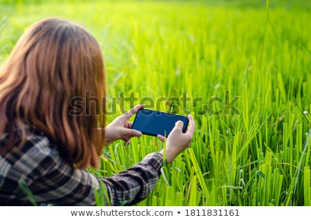 Agronomist using smart phone mobile app to analyze crop developm Stock photo © stevanovicigor