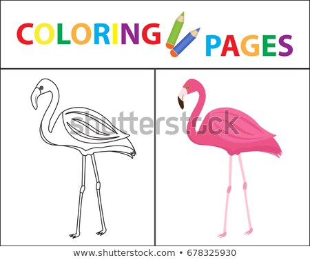 coloring book page flamingo sketch outline and color version coloring for kids childrens educati stock photo © lucia_fox