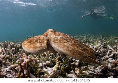 female octopus in the ocean Stock photo © adrenalina