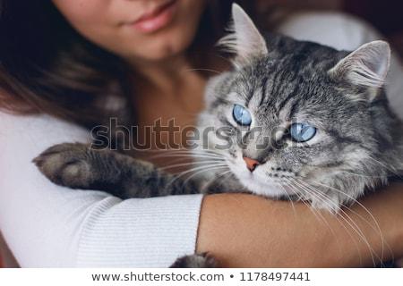 Vrouw katten portret witte achtergrond Stockfoto © IS2