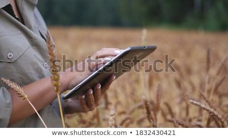 női · gazda · búzamező · kéz · megérint · gabonapehely - stock fotó © stevanovicigor