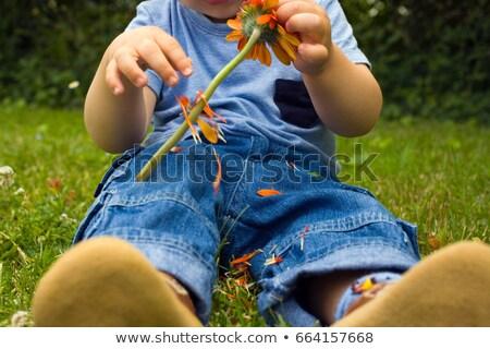 Baba fiú szőlőszüret szirmok el virág Stock fotó © IS2