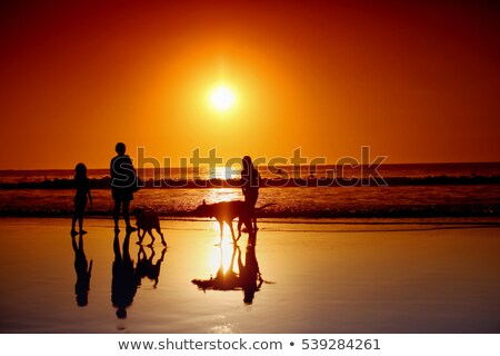 surfista · playa · verano · naranja · océano · silueta - foto stock © bluering