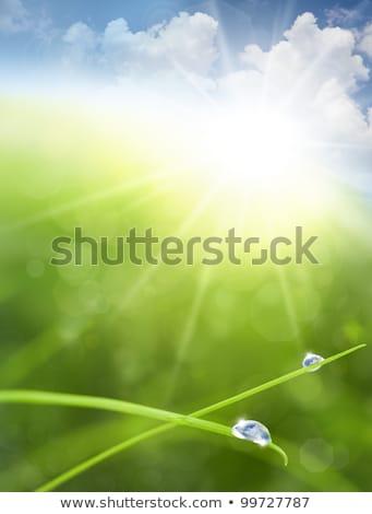 Resumen verde borroso bokeh gotas de agua levitación Foto stock © Valeriy