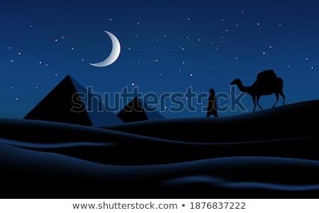 пирамида верблюда сцена ночь иллюстрация небе Сток-фото © bluering
