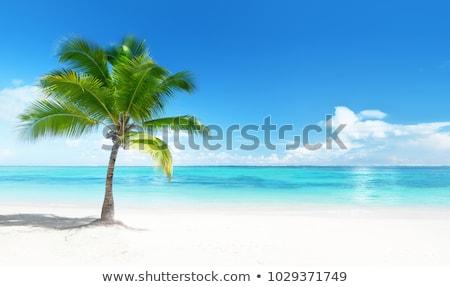 Kókuszpálma fák fehér homok trópusi édenkert természet Stock fotó © lunamarina