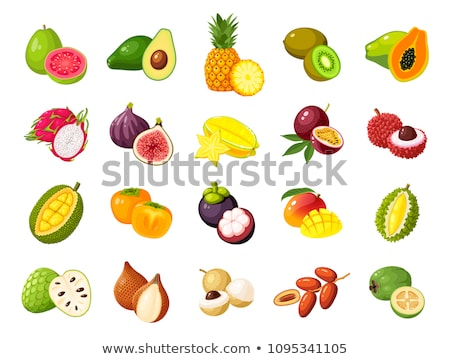 Tropical Fruits Exotic Meal Avocado Durian Vector Stock photo © robuart