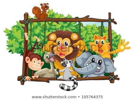 животных зоопарка окна группа здании стены стекла Сток-фото © colematt