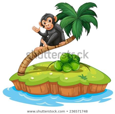 Singe au-dessus coco arbre île blanche Photo stock © colematt