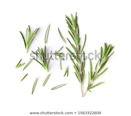 orgânico · alecrim · plantas · macro · raso · jardim - foto stock © marylooo