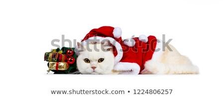 Cute · кремом · взрослый · короткошерстная · кошки · Рождества - Сток-фото © CatchyImages