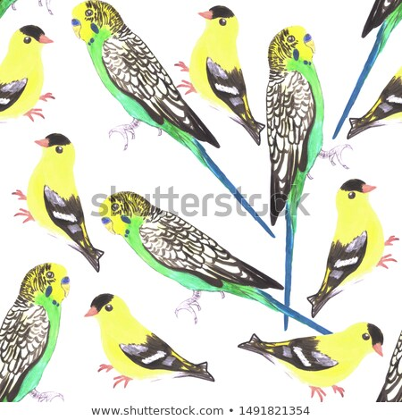Budgies and american goldfinches seamless watercolor background in vibrant color scheme Stock photo © shawlinmohd