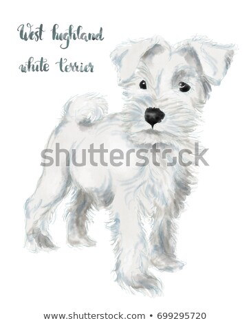 Silhouette of an adorable West Highland White Terrier Stock photo © vauvau