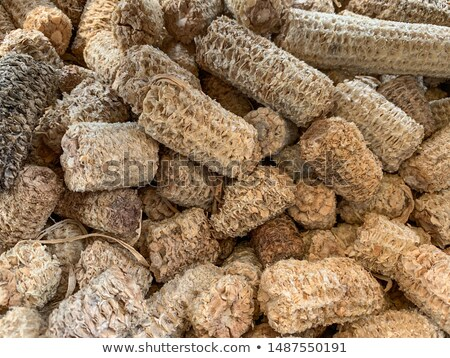 drying corn cobs stock photo © craig