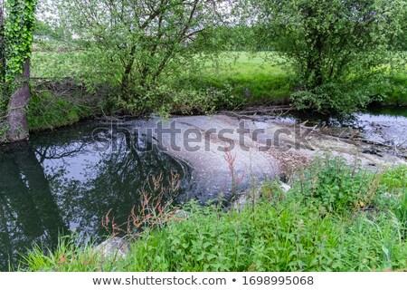 toxique · déchets · forêt · environnement · nature · métal - photo stock © carenas1