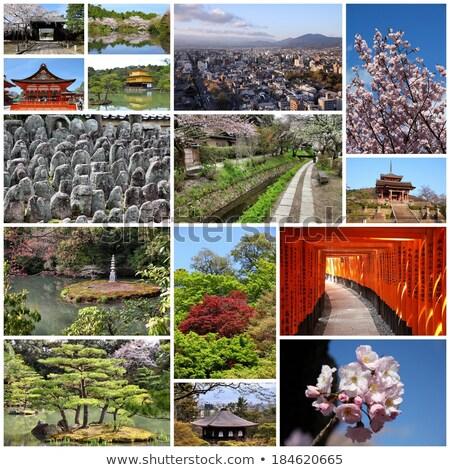 Zen gibi resim kolaj birkaç bambu Stok fotoğraf © ldambies