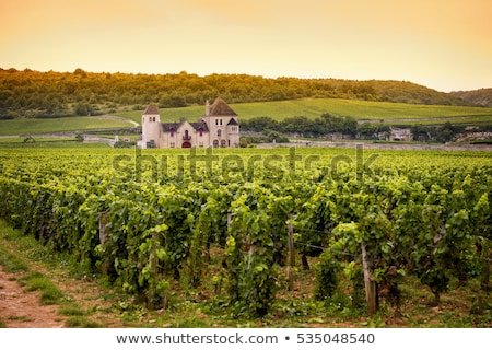 wijnstok · wijngaard · Frankrijk · blad · najaar · druiven - stockfoto © phbcz